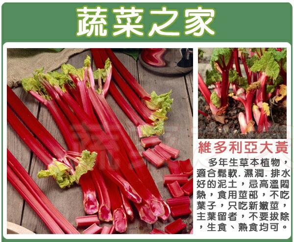 【蔬菜之家】C19維多利亞大黃