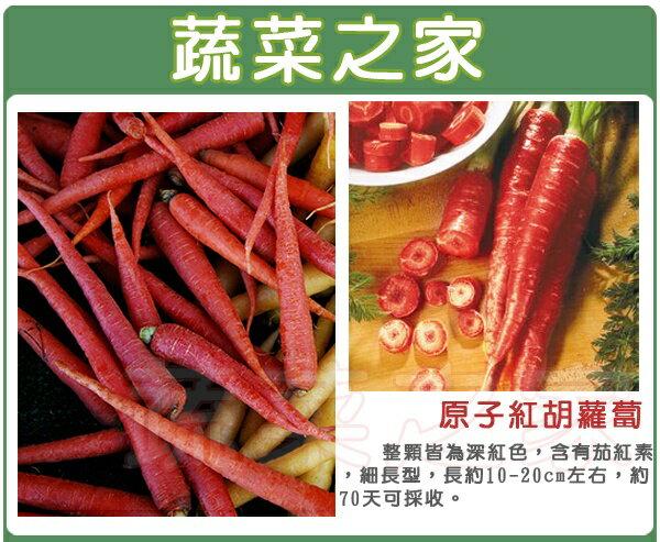 【蔬菜之家】C22.原子紅胡蘿蔔種子