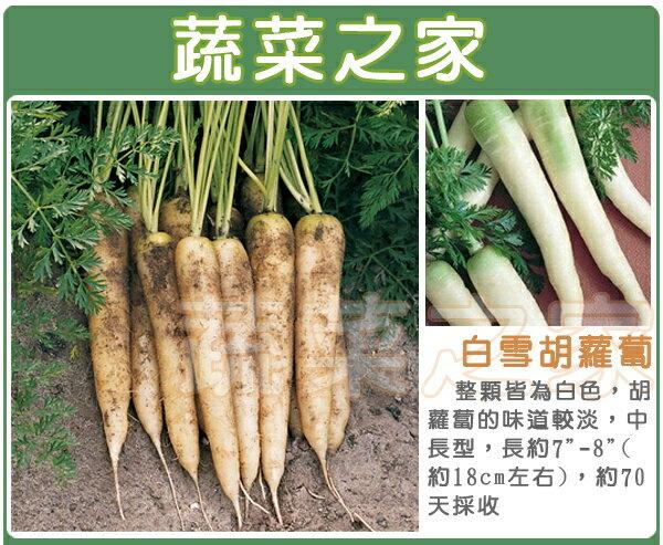【蔬菜之家】C23.白雪胡蘿蔔種子