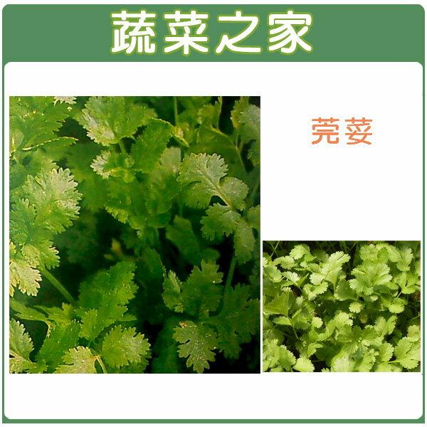 <br/><br/>  【蔬菜之家】大包裝F04.芫荽(香菜)種子350克<br/><br/>