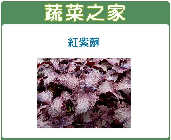 【蔬菜之家】F08.紅紫蘇(日本進口)種子500顆