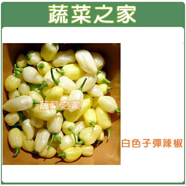 【蔬菜工坊】G93.白色子彈辣椒種子