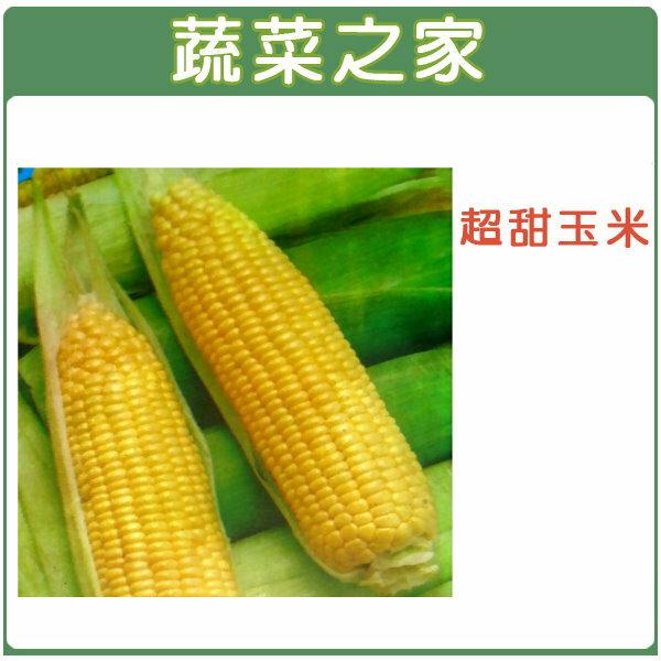 【蔬菜之家】G07.超甜玉米 (黃穗)種子30顆