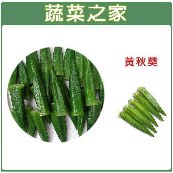 【蔬菜之家】大包裝G10.黃秋葵種子900顆