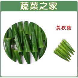 【蔬菜之家】G10.黃秋葵種子50顆