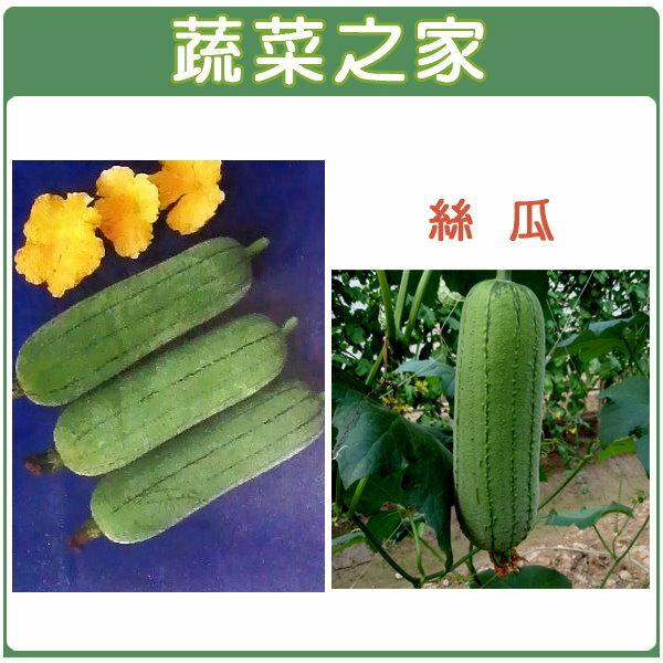 【蔬菜之家】G15.絲瓜種子20顆