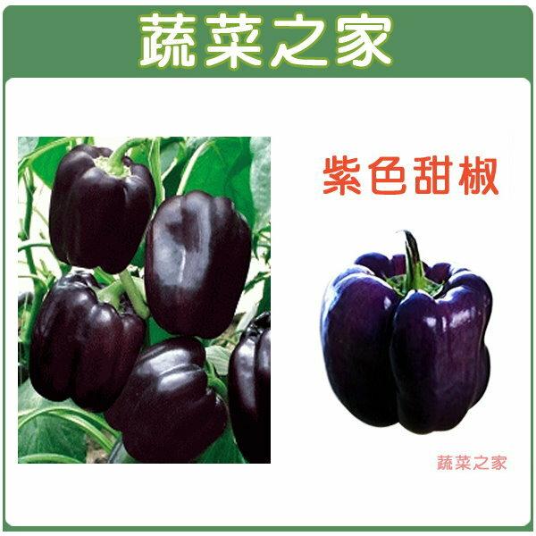 【蔬菜之家】G17紫色甜椒種子3顆