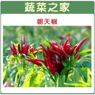 【蔬菜之家】G29.朝天椒(瑞興)種子15顆