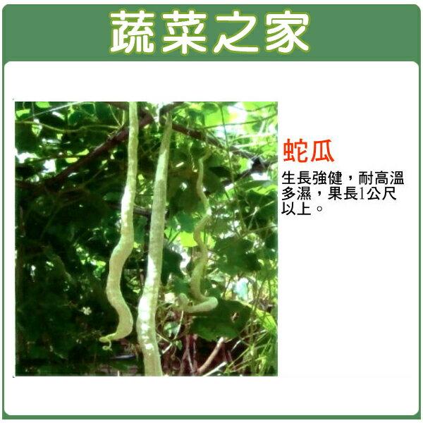【蔬菜之家】G30.蛇瓜種子2顆