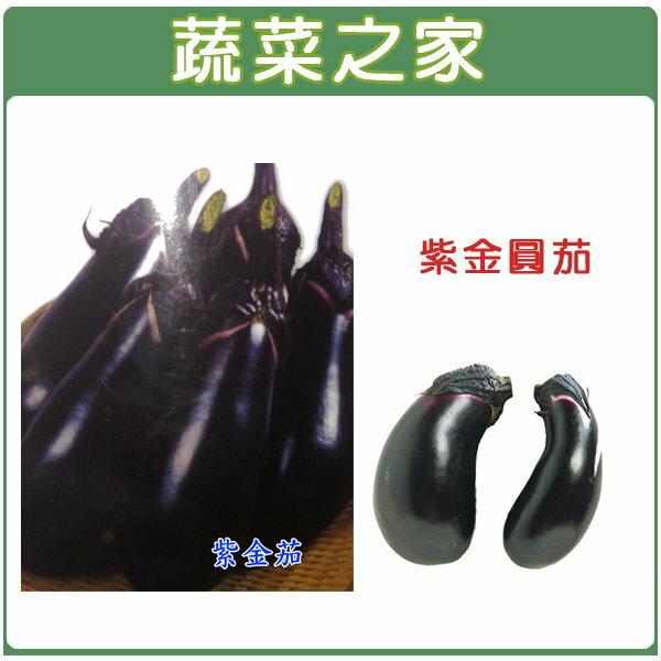 【蔬菜之家】大包裝G33.紫金圓茄(日本進口紫金茄)種子180顆