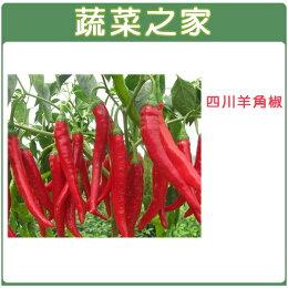 G37.四川羊角椒種子80顆