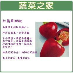 【蔬菜之家】G44.紅蘋果甜椒種子3顆(美國進口)