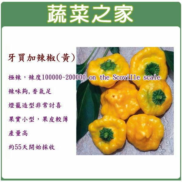 【蔬菜之家】G45.牙買加辣椒種子5顆(黃,極辣)