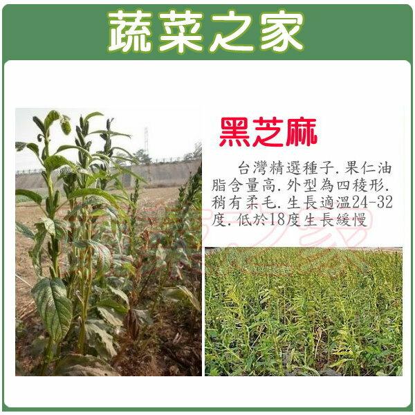 【蔬菜之家】G64.黑芝麻(胡麻)種子3000顆