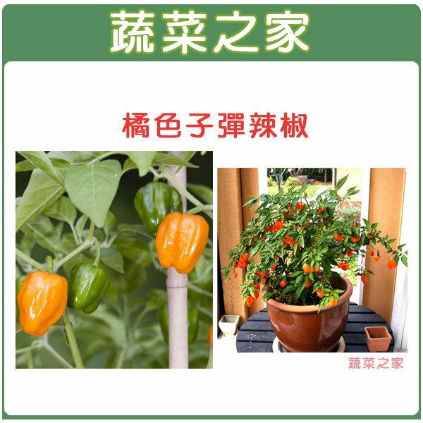 【蔬菜之家】G72橘色子彈辣椒5顆