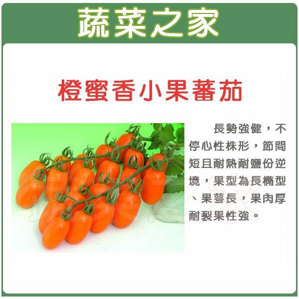 【蔬菜之家】G73橙蜜香小蕃茄種子(共有2種包裝可選)