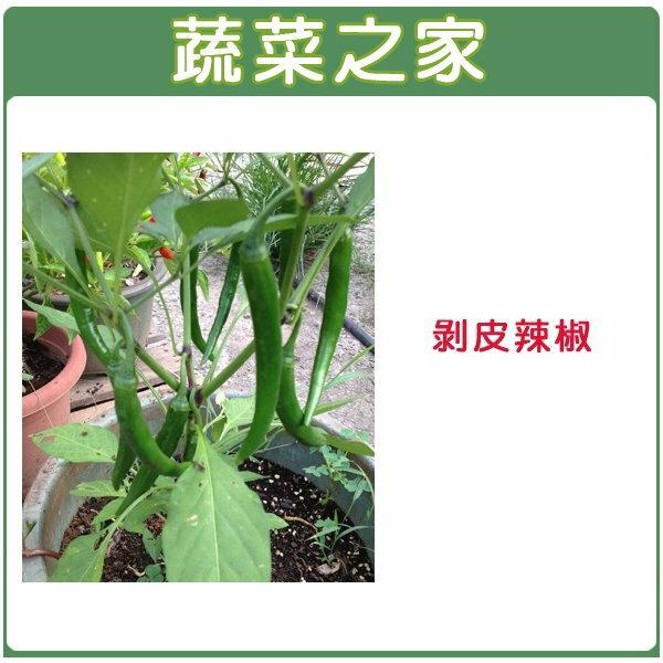 【蔬菜之家】G74剝皮辣椒種子100顆