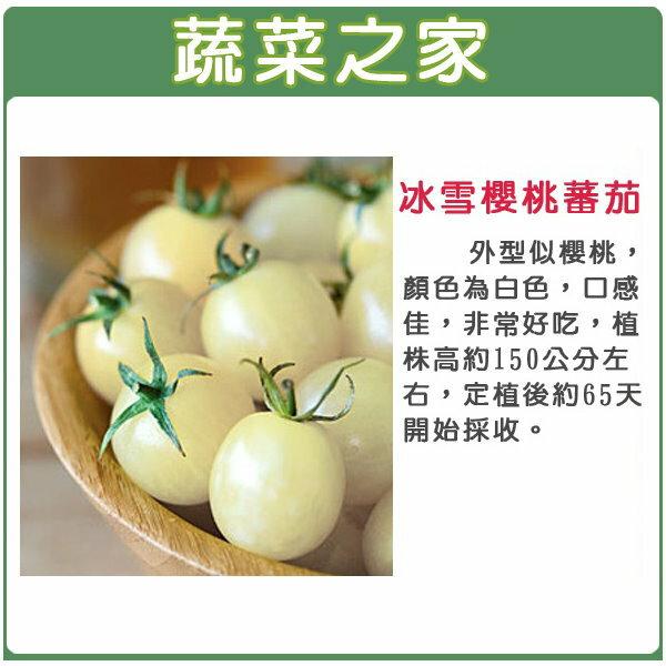 【蔬菜之家】G77冰雪櫻桃蕃茄種子