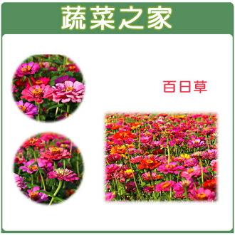 【蔬菜之家】H02.百日草種子200顆