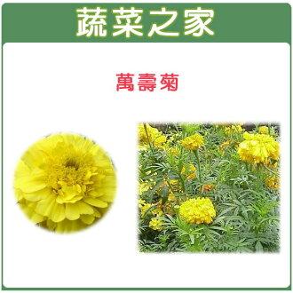 【蔬菜之家】H04.萬壽菊種子200顆