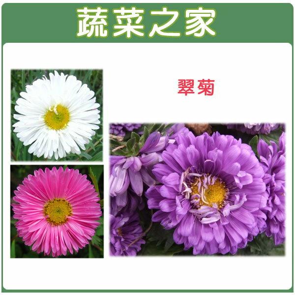 【蔬菜之家】H21.翠菊(蜜蕾,混合色,高25cm)種子30顆