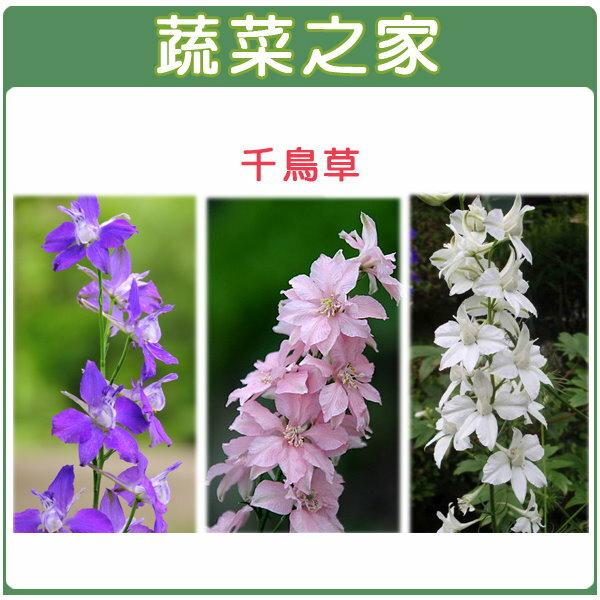 【蔬菜之家】H25.千鳥草(混合色,高90~120cm)種子35顆