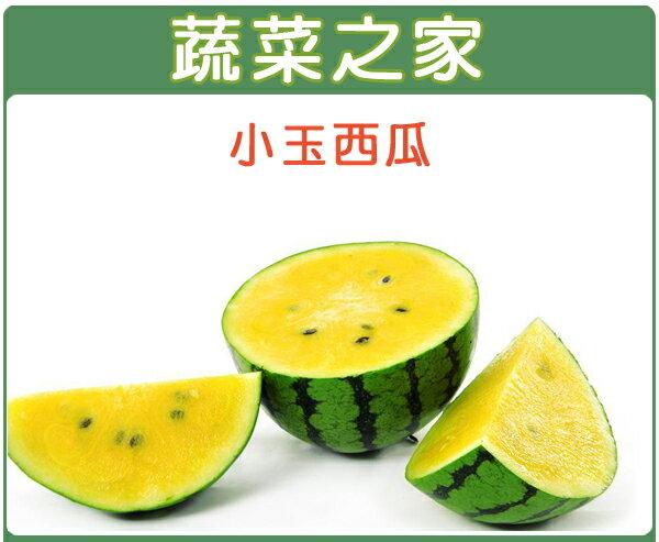 【蔬菜之家】I02.小玉西瓜種子 3顆