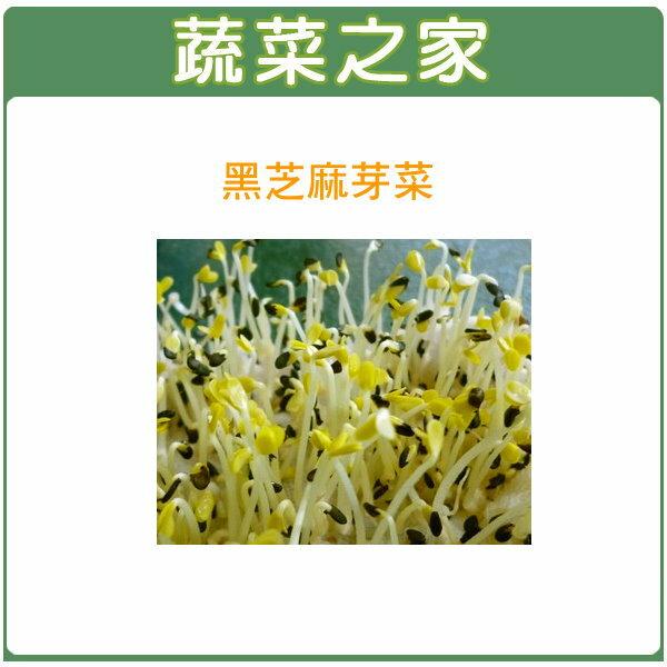 【蔬菜之家】 J14.黑芝麻芽(芽菜種子)種子3000顆