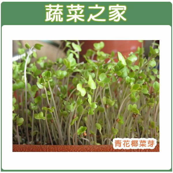 【蔬菜之家】J03.青花椰菜芽(芽菜種子)種子2000顆