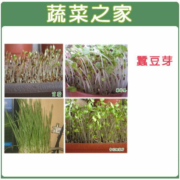 【蔬菜之家】J07.蠶豆芽(芽菜種子)20顆