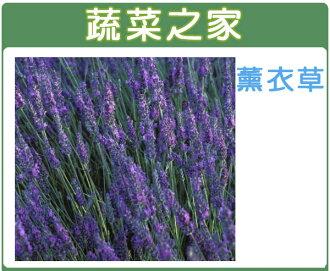 【蔬菜之家】K09.薰衣草種子40顆