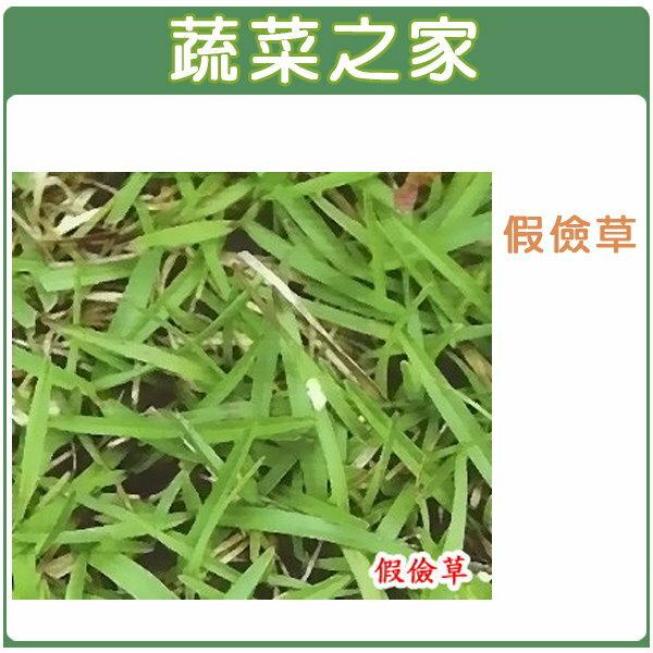 【蔬菜之家】M04.假儉草種子1000顆
