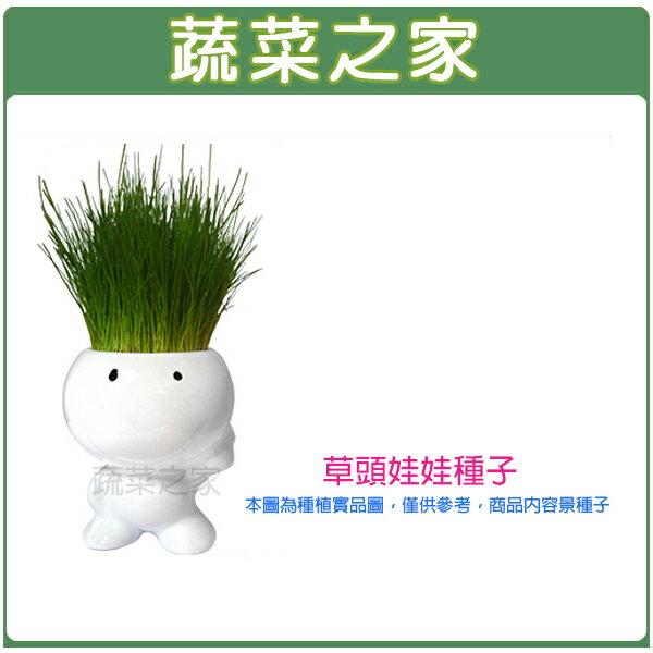 【蔬菜之家】M10.草頭娃娃種子