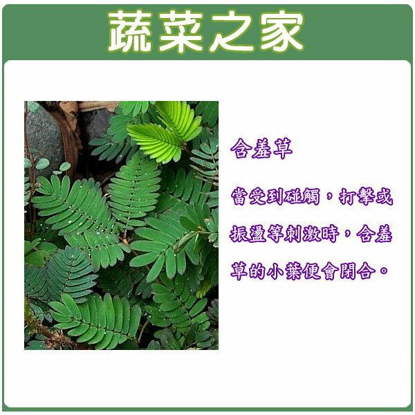 【蔬菜之家】P02.含羞草種子 (含羞) (有兩種包裝規格可選)