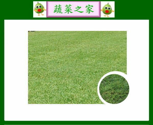 【蔬菜之家】四季春草皮種子1公斤裝