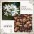 巴拿馬 藝妓咖啡 Ninety plus 荔西羅Lycello 咖啡豆半磅 ➤藝妓花香層次鮮明 天然甘甜細緻 ★送-莊園濾掛咖啡★ 0