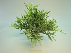★超低價★PVC植絨銀葉菊束人造花空間景觀佈置造景