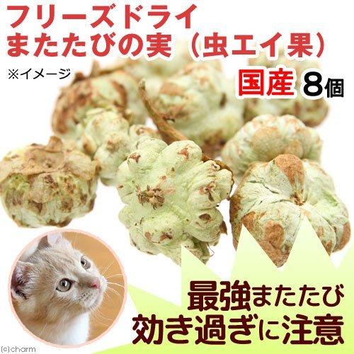 日本國產 冷凍乾燥蟲嬰果 / 蟲癭果 / 8顆