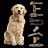 【海爾 Haier】寵物專業版無線手持吸塵器 + 專業10配件組【滿3000送10%點數】 4