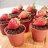 草莓盆栽提拉米蘇(一盒10入$490) - 限時優惠好康折扣