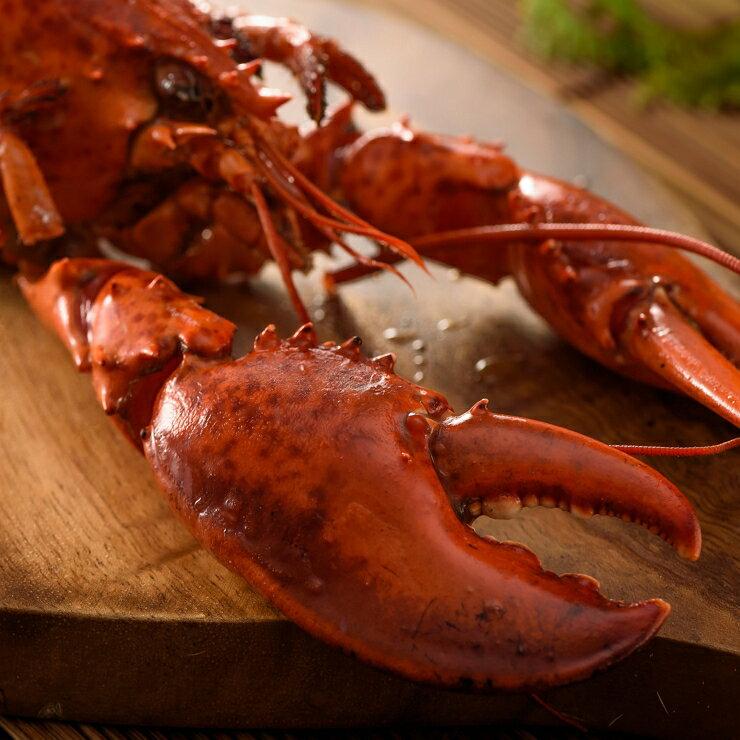 ***童童水產生鮮***熟凍波士頓龍蝦(350~400公克/隻)