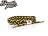 BEETLE PLUS 西門町經銷 全新 美國品牌 RASTACLAT SHOELACE BRACELET KINGSTON 牙買加 紅 綠黃 鞋帶 編織 手環 RA-54 - 限時優惠好康折扣