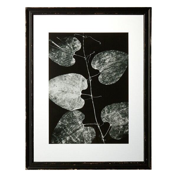 黑白植物標本掛畫(葉)