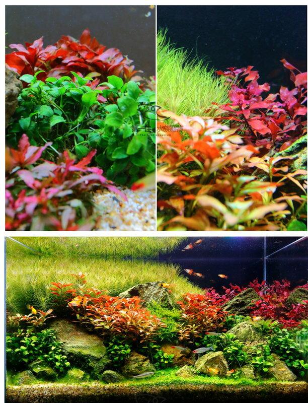 [第一佳 水族寵物] 台灣ISTA伊士達〔IF-400〕高演色專業植物造景燈 45cm