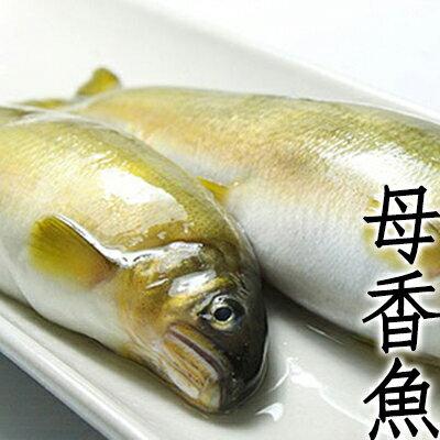 盅龐食品貿易:㊣盅龐水產◇母香魚5隻裝◇1kg±5%盒零$590元盒保證全場最低團購燒烤批發