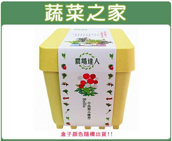 【蔬菜之家004-D07】iPlant小農場系列-小品菊