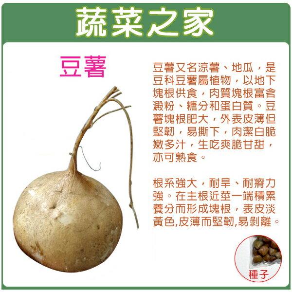 【蔬菜之家】C17.豆薯種子30顆