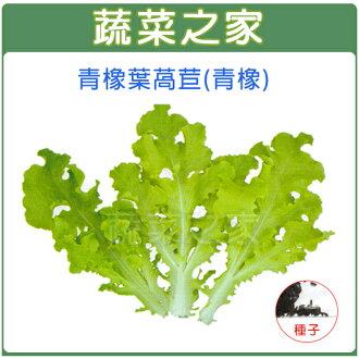 【蔬菜之家】A78.青橡葉萵苣種子500顆(青橡)