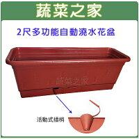 【蔬菜之家005-AP60】2尺多功能自動澆水花盆(含底盤) 0