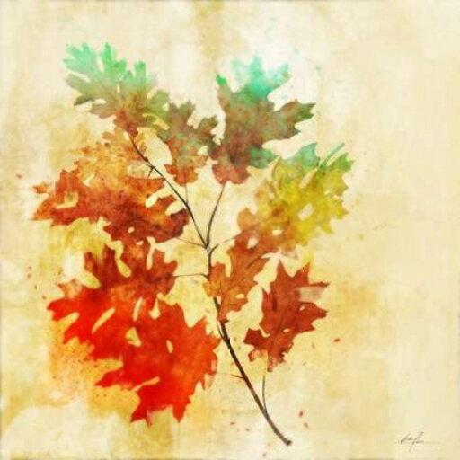 Vibrant Autumn 2 Rolled Canvas Art - Ken Roko (12 x 12) 929754150d44319907bd5abe939c7891